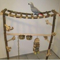 Papageien Freisitze