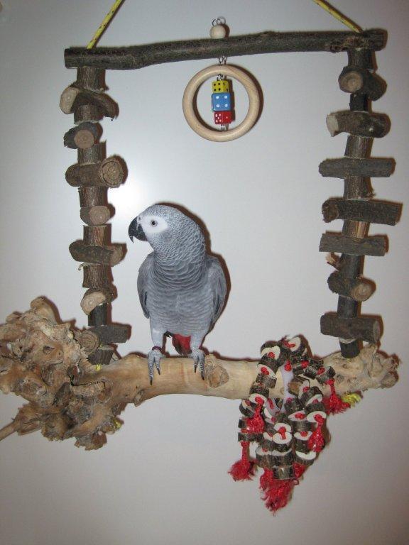 Papageienschaukel Wurzelholz