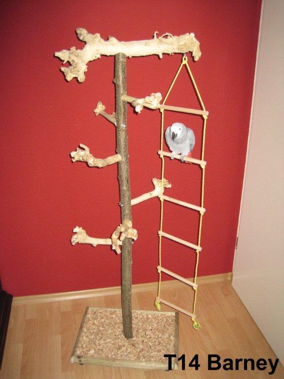 Papageienbaum Typ 14 Barney